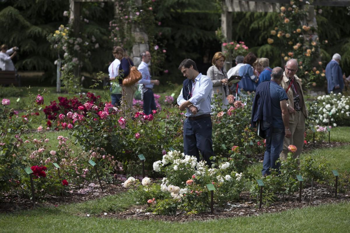 Roses-in-the-sun-dia2232-e1424431488372