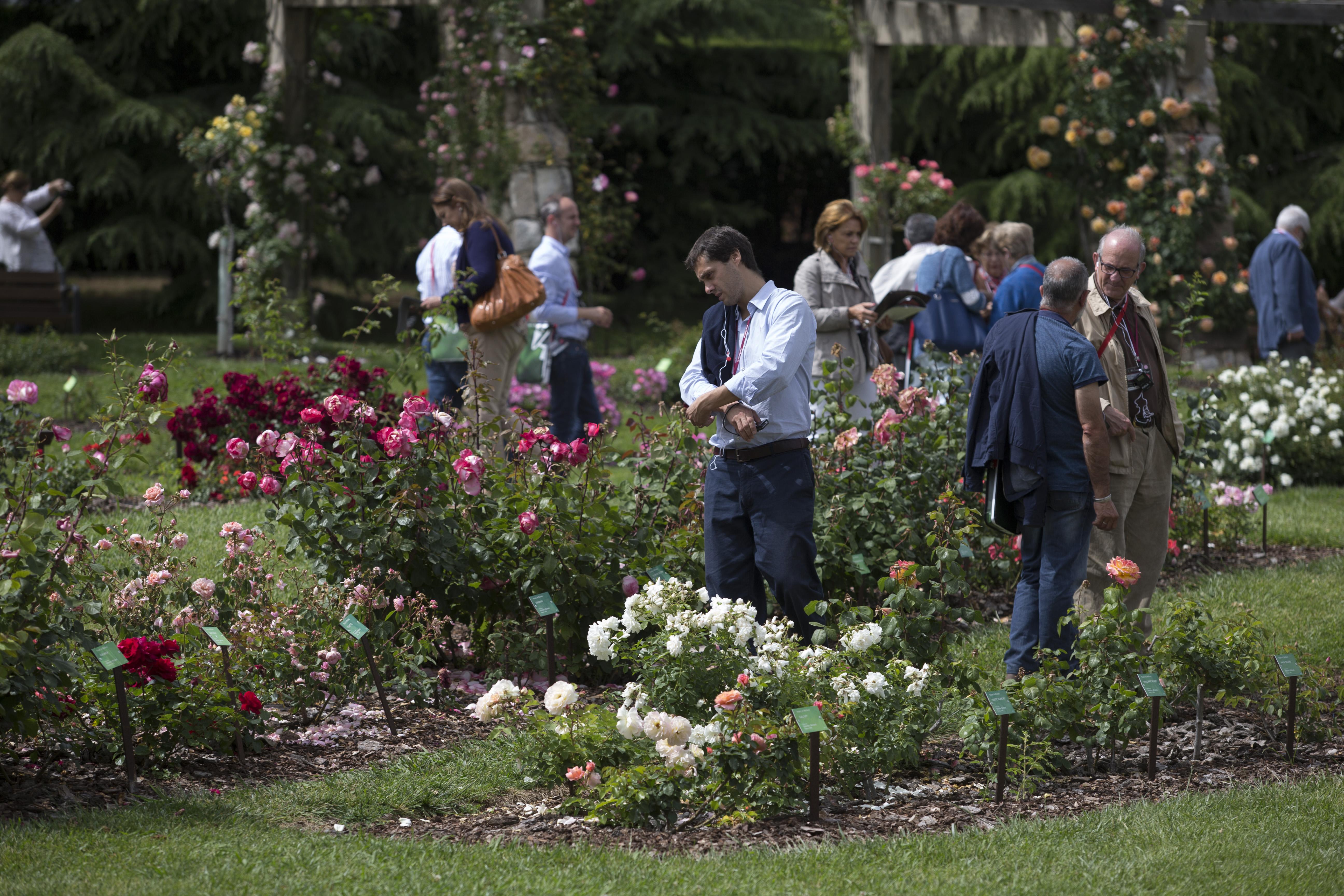 Roses-in-the-sun-dia2232